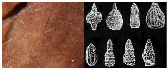 Gambar 5. Mikrokristalin Radiolarian Chert dan Radiolarit Penyusun Batuan