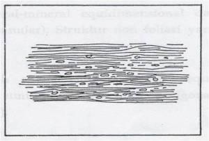 Gambar Struktur Phylitic