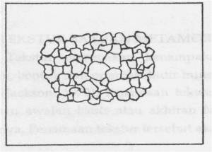 Gambar Sruktur Granulose