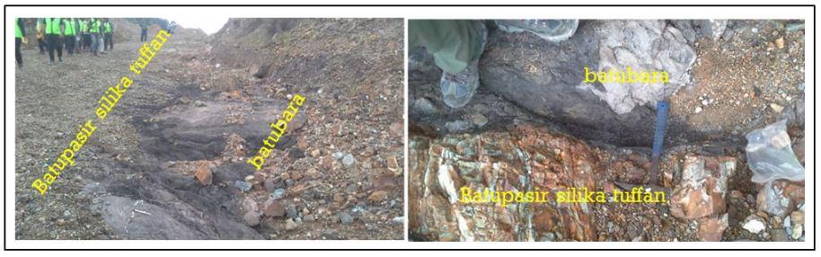Batubara dan Batupasir Silika Tuffan di Perbukitan Ngalau