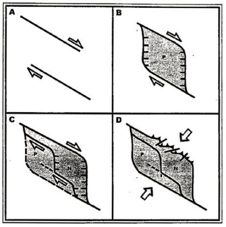 Gambar 2. Skema evolusi tektonik cekungan tarik pisah Ombilin, Sumatra Barat menurut Hastuti, dkk (2001). (A)Kapur-Tersier Awal (B)Paleosen (C)Miosen Awal (D)Plio-Pleistosen.